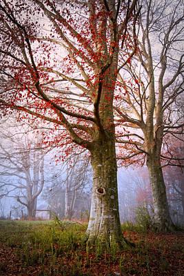 Trees In The Fog Art Print by Debra and Dave Vanderlaan