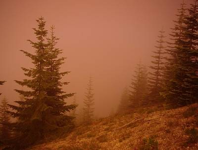 Pine Needles Photograph - Trees In The Fog by Jeff Swan