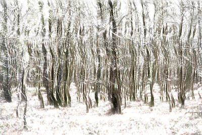 Trees In The Forest Abstract Art Print