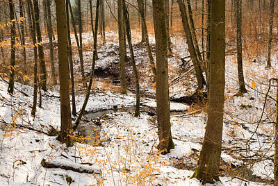 Winter Landscape Photograph - Trees In The Forest In Winter Brown And Orange Leaves by Matthias Hauser