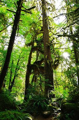Trees In The Hoh National Rain Forest Art Print by Jeff Swan