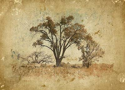 Trees In The Lowland Art Print