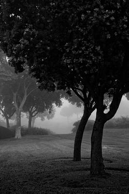 Trees In The Midst 1 Art Print