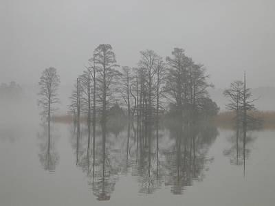 Digital Art - Trees In The Mist  by Claude McCoy