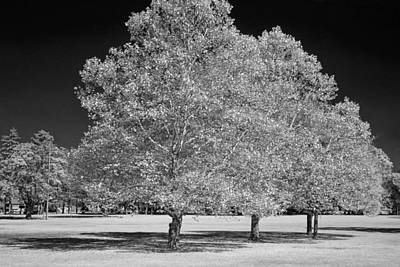 Photograph - Trees In The Park A Black And White Infrared Photograph by Randall Nyhof