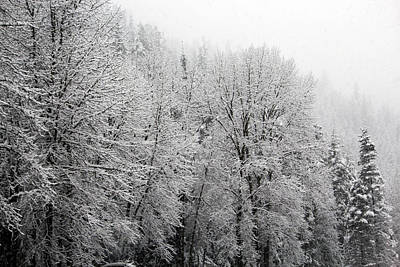 Photograph - Trees In The Snow 1 by Edward Hawkins II