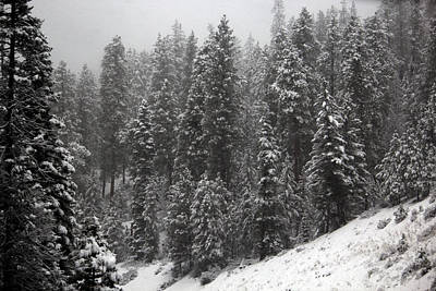 Photograph - Trees In The Snow 2 by Edward Hawkins II