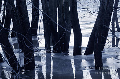 Background Photograph - Trees In Water by Michal Bednarek