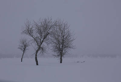 Photograph - Trees In Winter by Susi Stroud