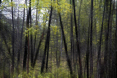Photograph - Trees June 4 2014 by Jim Vance
