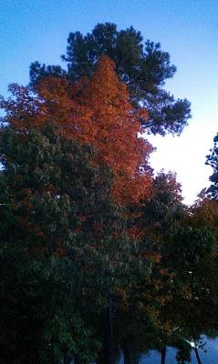 Photograph - Fall Colors At Sunset by Kenny Glover