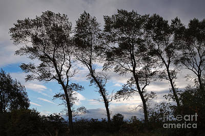 Trees Print by Louise Heusinkveld