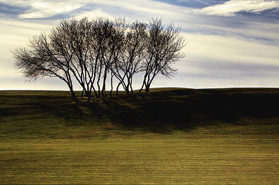 Photograph - Trees November Late Afternoon by Roger Passman
