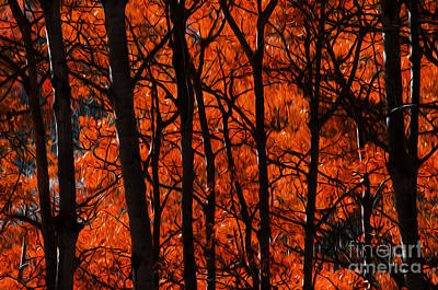 Of Autumn Photograph - Trees Of Autumn by Bob Christopher