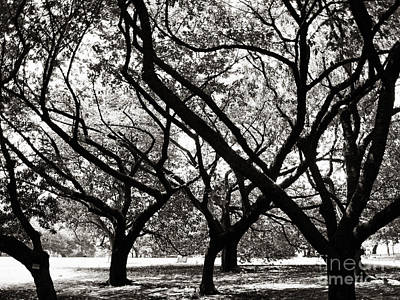 Photograph - Trees Of Harajuku by Ethna Gillespie
