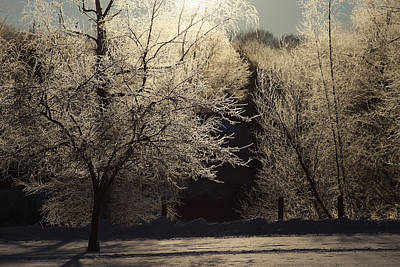 Trees Of Ice Art Print