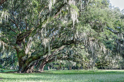 Trees Of Magnolia Art Print