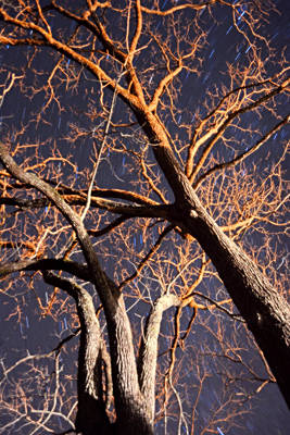 Photograph - Trees Of Night by Emily Stauring