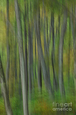 Surreal Landscape Photograph - Trees Of The Forest Green - Blue Ridge Parkway by Dan Carmichael