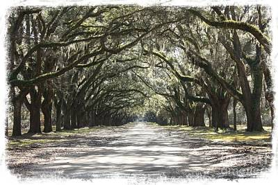 Photograph - Trees Of The South by Carol Groenen