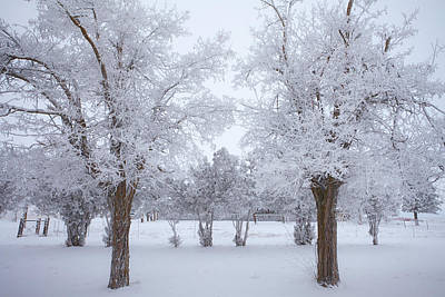 Winter Scenes Photograph - Trees Of Winter by Darren  White