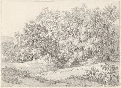 Work On Paper Drawing - Trees On A Dune Ridge At The Hartekamp, Heemstede by Quint Lox