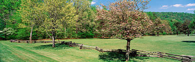 Pisgah Photograph - Trees On A Field, Davidson River by Panoramic Images