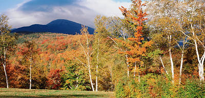 Mount Washington Photograph - Trees On A Field In Front by Panoramic Images