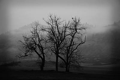 Photograph - Trees On A Foggy Morning by Bonnie Bruno