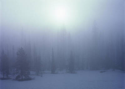 Photograph - Trees On A Foggy Winter Morning by Alex Llobet