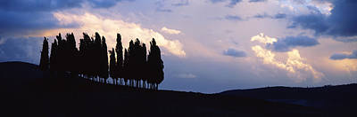 Trees On A Hill, Crete Senesi, Tuscany Art Print by Panoramic Images