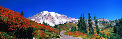 Trees On A Hill, Mt Rainier, Mount Art Print