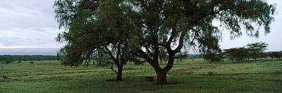 Trees On A Landscape, Lake Nakuru Art Print