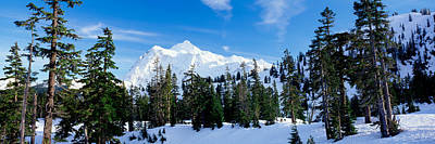 Trees On A Snow Covered Mountain, Mt Print by Panoramic Images