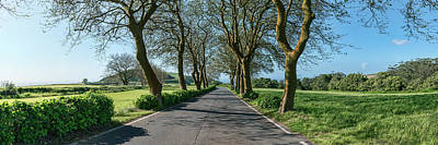 Sao Miguel Island Photograph - Trees On Both Sides Of Road, Sao Miguel by Panoramic Images