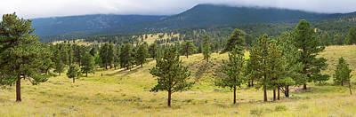 Trees On Landscape Along Trail Ridge Art Print