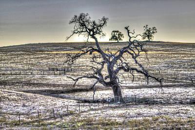 Photograph - Trees On Latrobe Road 2 by SC Heffner