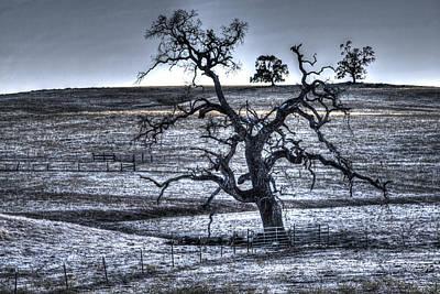 Photograph - Trees On Latrobe Road by SC Heffner