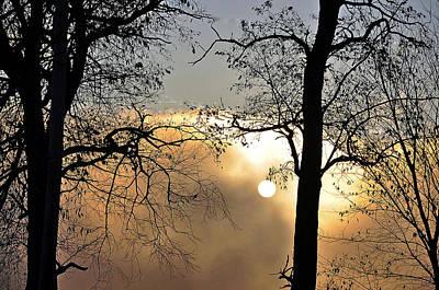 Trees On Misty Morning Art Print