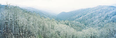 Trees On Mountain, Newfound Gap, Great Art Print by Panoramic Images