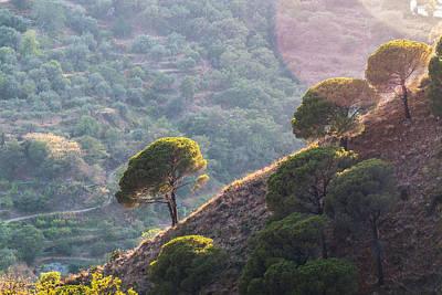 Kitchen Mark Rogan - Trees on steep hill by Salvatore Pappalardo