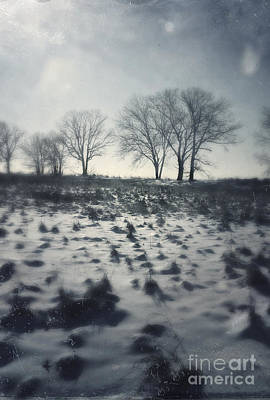 Photograph - Trees On The Edge Of A Field by Jill Battaglia