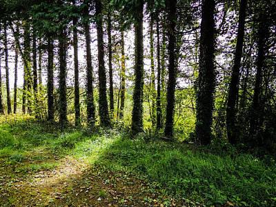 Photograph - Trees On The Shannon Estuary by James Truett