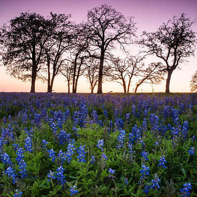 Wildflowers In Texas Photograph - Trees On The Top Of Bluebonnet Hill - Wildflower Field In Lake Somerville Texas by Ellie Teramoto