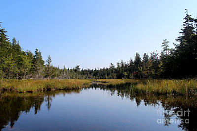 Pine Trees Photograph - Trees On The Water by Kathleen Garman