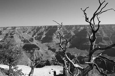 Photograph - Trees Over Grand Canyon by Robert  Moss