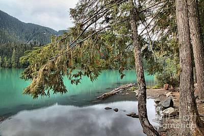 Photograph - Trees Overhanging Cheakamus Lake by Adam Jewell