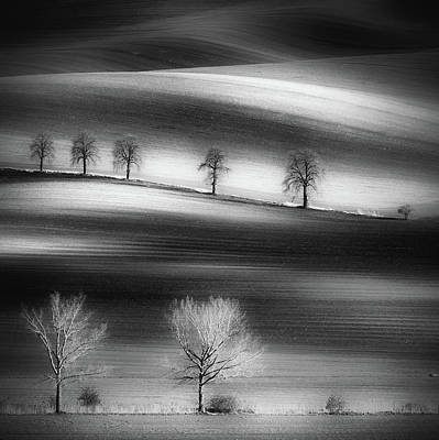 Shadow Wall Art - Photograph - Trees by Piotr Krol (bax)