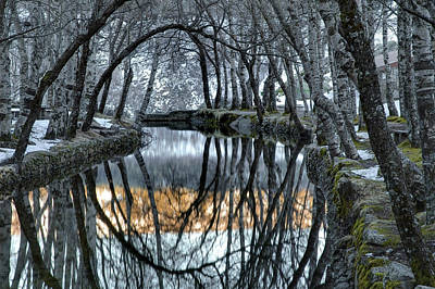Trees Reflect In The Spring Of Zezere Art Print