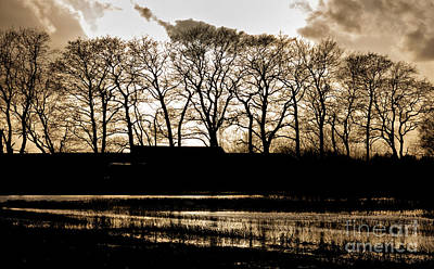Colors Photograph - Trees Silhouettes by Mike Santis